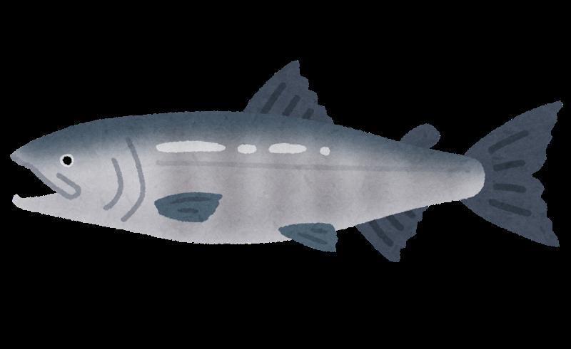 秋鮭(シロサケ)の旬はいつ?以外に知らない鮭のアレコレ