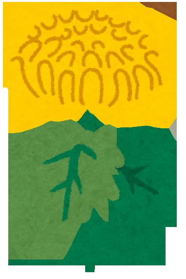 2016年の重陽の節句はいつ?何を食べるの?菊との関係は?