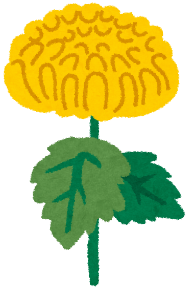 菊の栽培方法は?差し芽って何?プランターで育てるコツは?