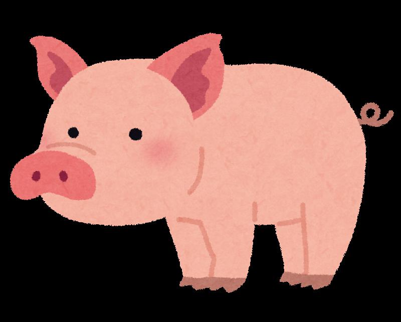 豚肉の生は危険!食べたらどうすればいい?
